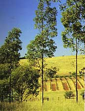Hunter Valley - Upper